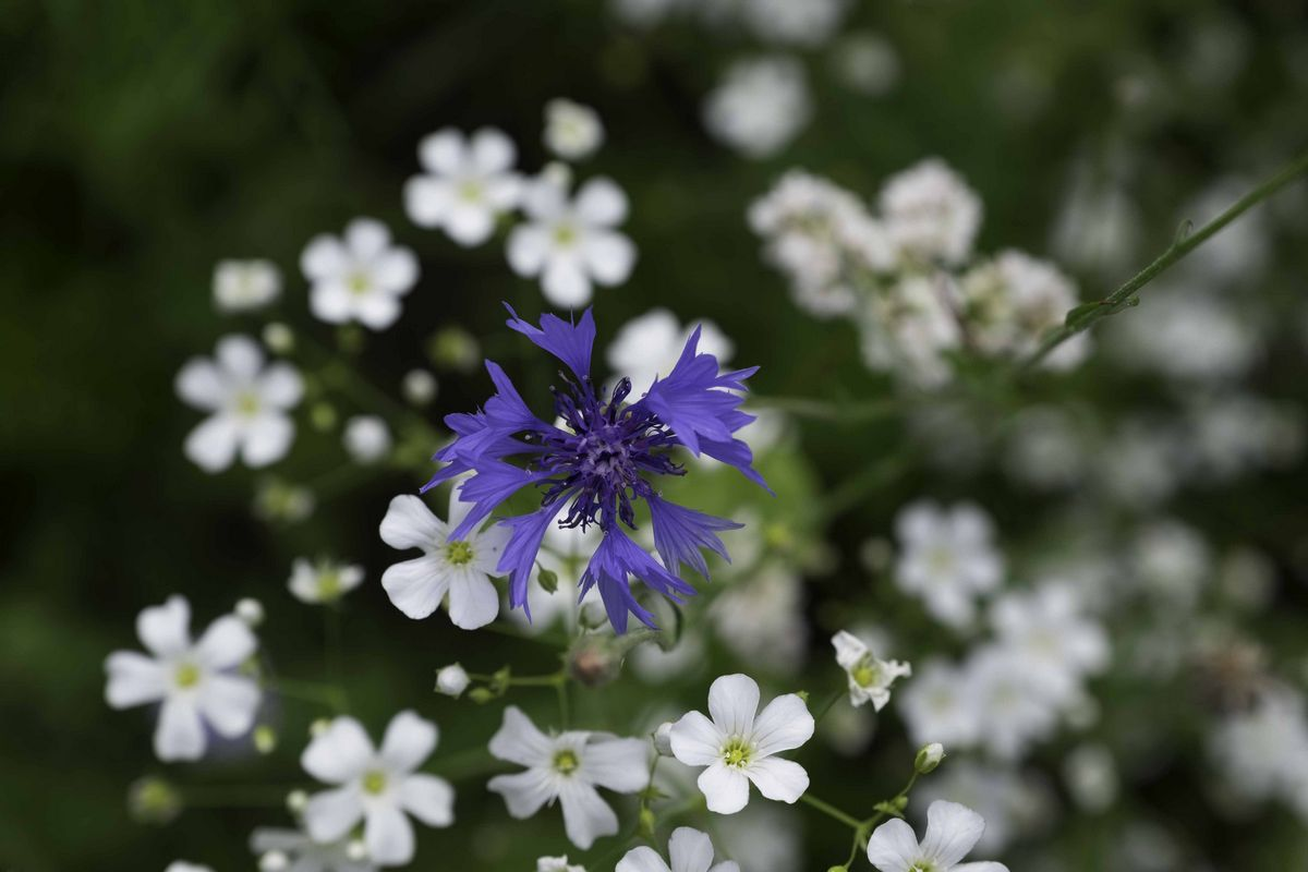 bloementuin-6802.jpg