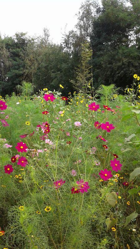bloementuin-154012.jpg