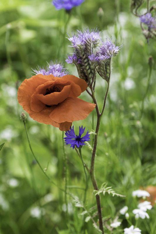 bloementuin-6823.jpg
